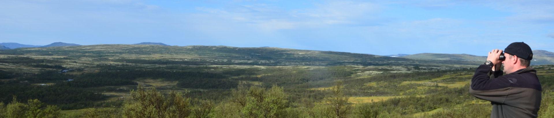 Knutshø villreinområde